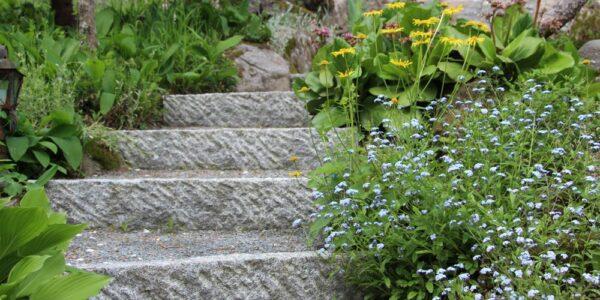 Graniidist trepiastmed